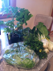 So my first basket included a bag of spinach (which I put in my smoothie every morning), a bunch of bok choy (which I'm going to have to figure out how to cook), a bunch of turnips (again, don't think I've ever eaten a turnip), a bunch of fresh oregano, a bunch of kale, and as I mentioned, an heirloom tomato plant that purportedly will produce flaming orange beefsteaks weighing on average 9-12 oz.  [Squeeeeeeeeal]  I'm so excited.