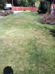 Here is the side yard.  The grass was like a foot high (woops....) but now it's like white people live here.
