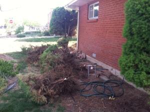 yard work 3